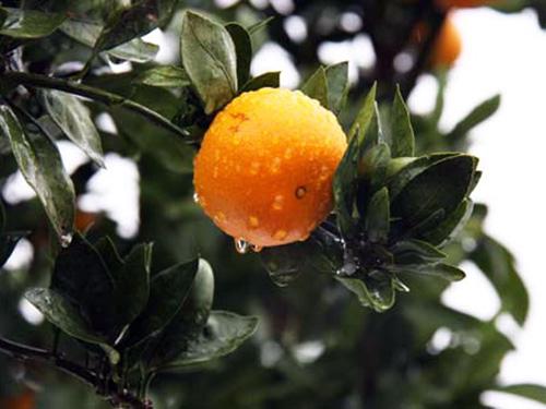 オレンジホーム
